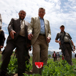 Photo: UNAMA/Eric Kanalstein: Mr. Fedotov visits an opium poppy field in Badakshan