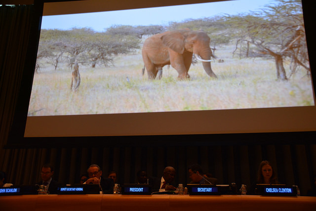 High-level stakeholder dialogue on illegal wildlife trade at the UN General Assembly - Photo: German Mission to the United Nations