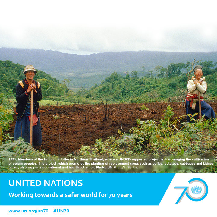 1991: Members of the Hmong hilltribe in Northern Thailand, where a UNDCP-supported project is discouraging the cultivation of opium poppies. The project, which promotes the planting of replacement crops such as coffee, potatoes, cabbages and kidney beans, also supports educational and health activities. Photo: UN Photo/J. Sailas.