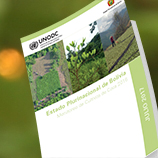 UNODC Monitoring Survey reports 14 per cent increase of coca bush cultivation in Bolivia during 2016. Image: UNODC