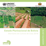 Latest UNODC Monitoring Report shows decline of coca cultivations in Bolivia