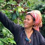 UNODC-supported Coffee Growers in Myanmar Receive a Fair Deal