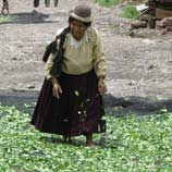 Photo: UNODC: Bolivia Coca Cultivation