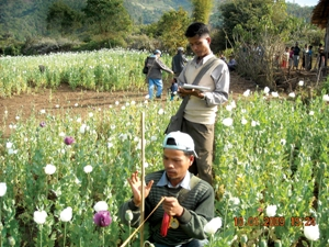 UNODC Illicit Crop Monitoring Programme staff surveying opium poppy fields in Myanmar