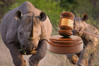 Wildlife Crime: Following the money to combat a regional scourge. Image: UNODC